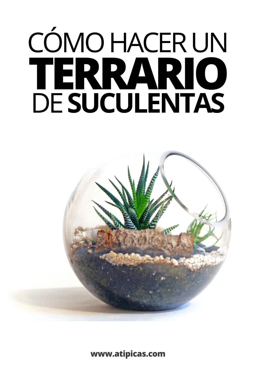 Cómo hacer un terrario de suculentas