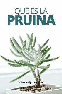 ¿Qué es la pruina?