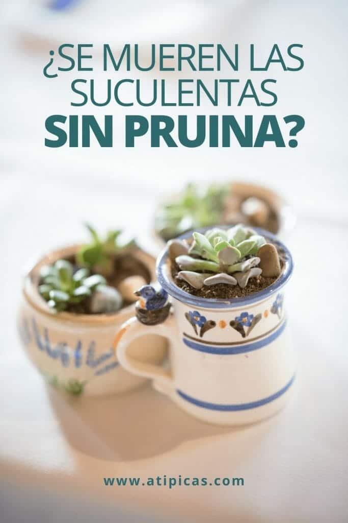 ¿Se mueren las suculentas sin pruina?