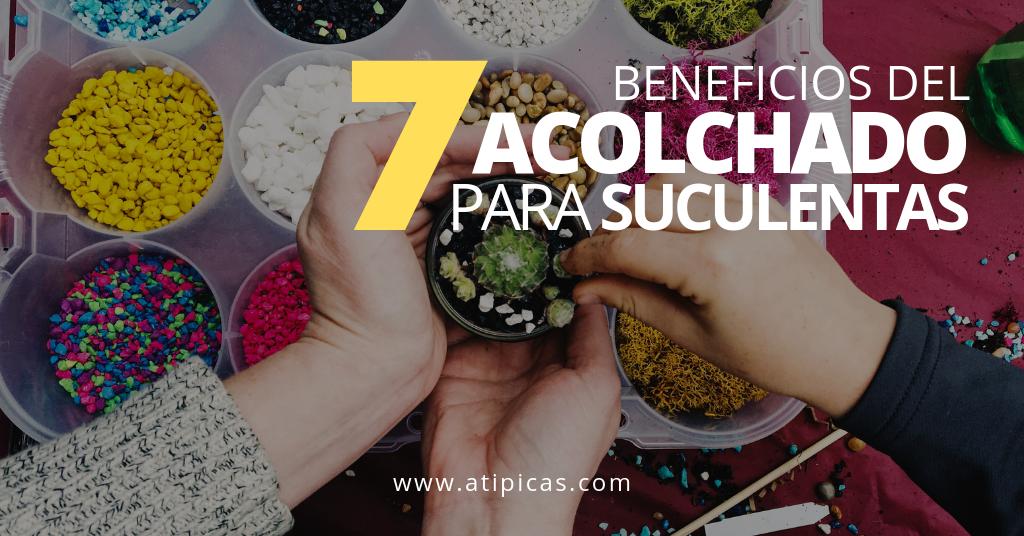 7 beneficios del acolchado para suculentas