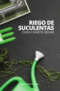 Cada cuánto regar tus plantas suculentas y cactus