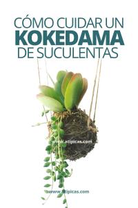 Cómo cuidar un kokedama de suculentas
