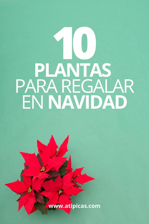 10 plantas para regalar en Navidad