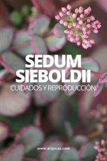 Sedum sieboldii: cuidados y reproducción