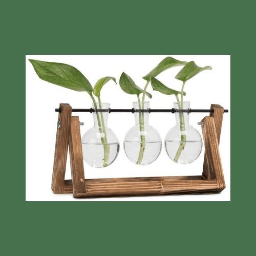 Bombillas de cristal con soporte para reproducir suculentas en agua