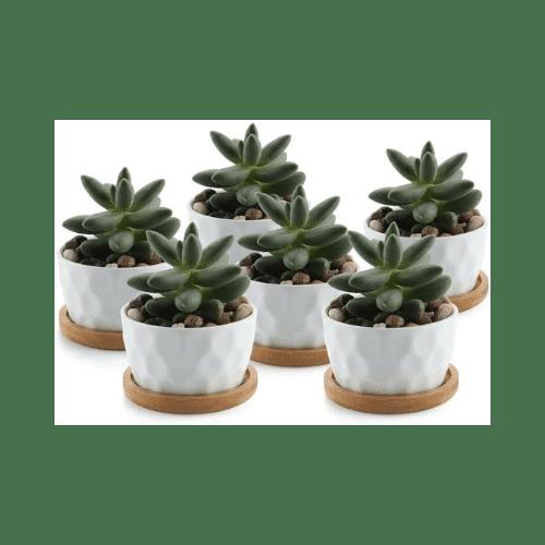 Macetas decorativas para suculentas