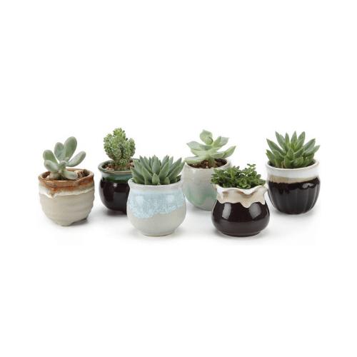 Macetas T4U. Set de 3 macetas de cerámica de 2.5 pulgadas, con 3 formas y base negra para cactus y suculentas