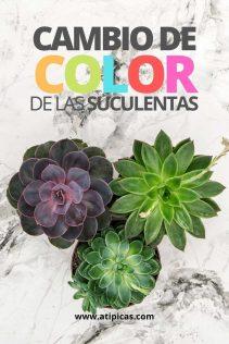 Cambio de color en las suculentas